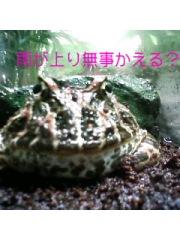 池袋サンシャインの水族館でみつけた蛙ちゃんです